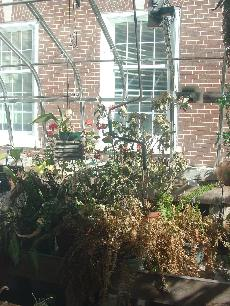A dying plant in the greenhouse next to King hall. (Julian Kennedy)