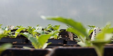 Guilford farm CSA: sharing the bounty