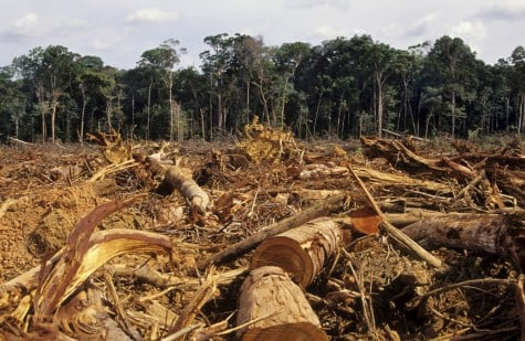 Illegal logging in Peru and Brazil hurts indigenous communities and ecosystems