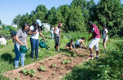 Students volunteer at the campus farm, which helps grow fresh vegetables for the college's dining services, this past August.