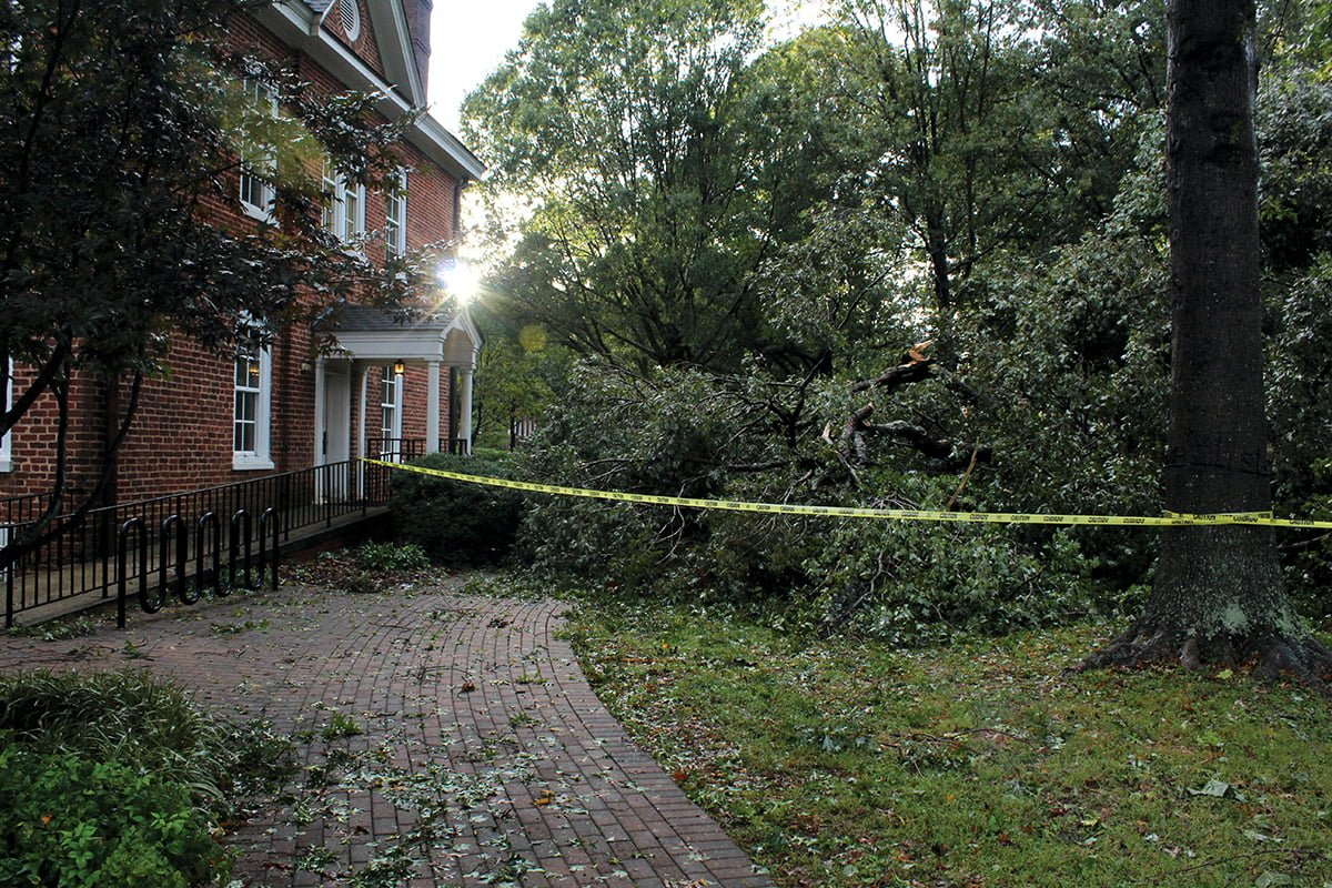 Hurricane Michael caused multiple trees to fall down on campus, including one near Archdale Hall, on Thursday, Oct. 11. // Photo By: Finn Williamson/The Guilfordian