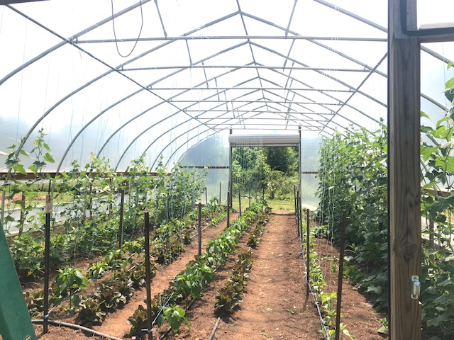 The Guilford College Farm is recognized for its significant productivity, given its smaller student body.