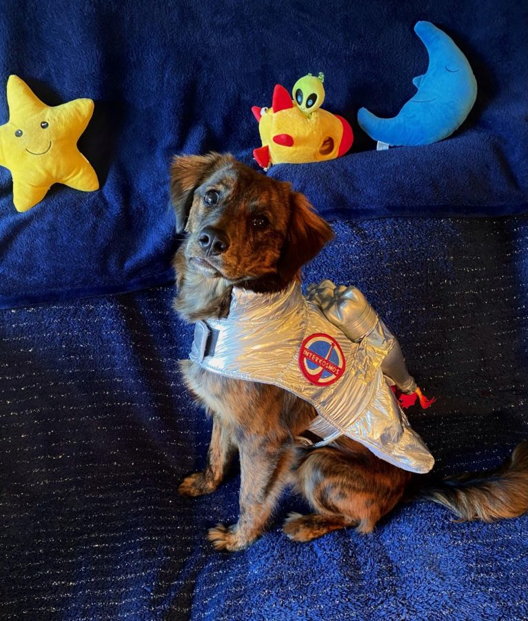 Cade Wooten's dog Cosmo dressed up as an astronaut.