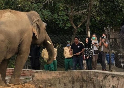 Kaavan, the world's loneliest elephant, greets guests at the zoo where he lives in Islamabad, Pakistan.