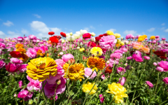 A field of spring flowers.
